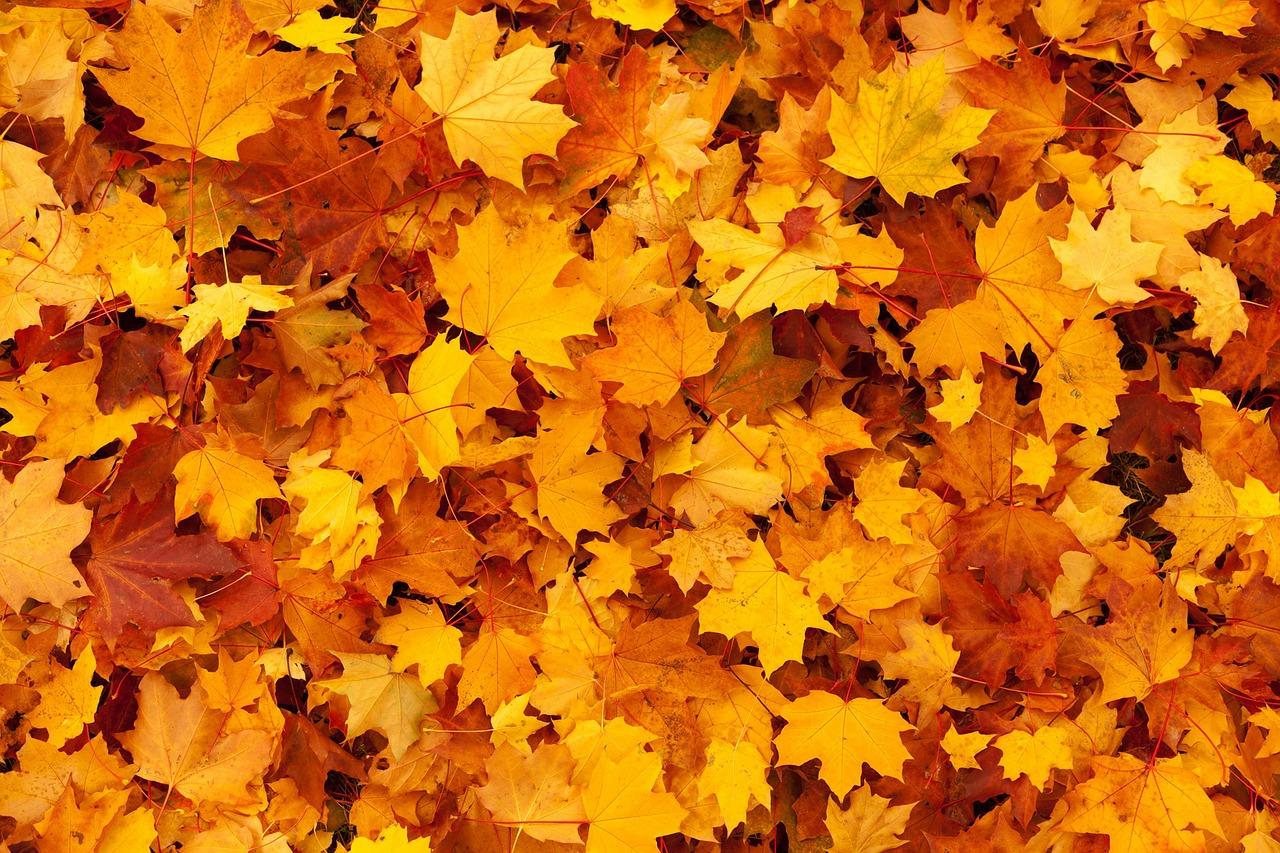 tenue automne